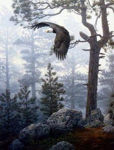 Shrouded_Forest.JPG (760×1000)