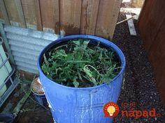 Making Liquid Fertilizer From Weeds Weed Plants, Liquid Fertilizer, Citrus Trees, Water Me, Grass, Seeds, Russian Recipes, Garden Ideas, Polish