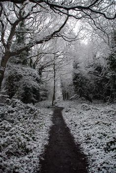 old-arcadia:  Snowed Under at Gillham Wood 7 - The Pathway Out (by antonychammond)