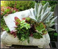 Small containers make great planters for succulents.  If the plants get leggy cut them off and push the cutting into the soil to root.