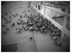 Hay unas pocas palomas, ¿no?