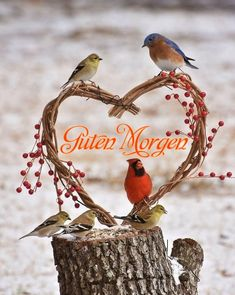 Selection: Sweet love is for the birds Picture of the day - Informations About Auswahl: Süße Liebe ist für die Vögel Bild des Tages - Pi Pretty Birds, Love Birds, Beautiful Birds, Animals Beautiful, Cute Animals, Beautiful Heart Pics, For The Birds, Birds Pics, Beautiful Pictures