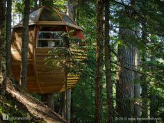 Este es un trabajo por amor y determinación escondido en los bosques de hemlock canadienses. Fue construida por el carpintero Joe Allen y se mantuvo en secreto por tres años. Puedes leet más sobre la cabaña en el árbol aquí www.naturalhomes.org/es/homes/hemloft.htm