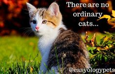 There are no ordinary cats! @easyologypets