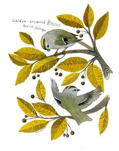 This is an 11 x 14 inch, high quality archival inkjet print made from the original watercolor painting of Golden-crowed Kinglets foraging in an autumnal tree. Printed with pigmented inks on archival, cotton rag Hahnemule matte fine art paper. Signed, numbered and stamped on back with artist's chop mark. Edition of 50.....................................Shipped domestically via USPS priority.Shipped internationally via first class international. If you would like to use a...