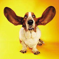 Teaching listening skills