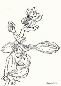 Blumen wie Menschen  Version 2  (c) Zeichnung von Susanne Haun
