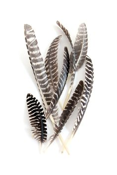 ★ℒ ★ mary jo hoffman Turkey Feathers, Bird Feathers, Pheasant Feathers, Wild Spirit, Wild Creatures, Nature Images, Fantastic Beasts, Rock Art, Crow