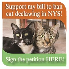 New York State Assembly   Linda B. Rosenthal   Support the bill to ban cat declawing in NY!