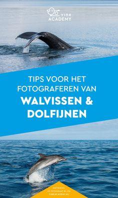 Heb je de kans op dolfijnen of walvissen te fotograferen als je op reis bent? Dan wil je zeker te weten dit artikel even lezen. Vol handige en praktische fotografietips. Reisfotografie, Natuurfotografie, Dierenfotografie