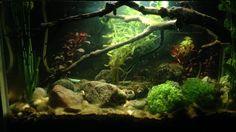 Actual 1 de mi acuario