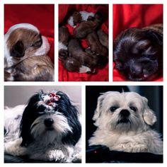 Artigo bem legal para quem ainda tem dúvidas da importância de ter animais☀️☀️☀️  http://mundoanimalcvg.blogspot.com.br/2010/04/importancia-do-animal-na-vida-da.html?m=1