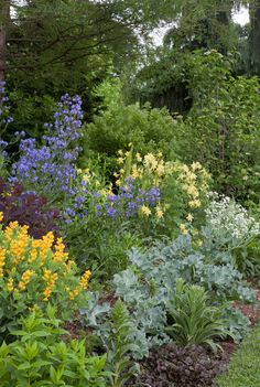 Baptisia sphaerocarpa 'Screaming Yellow', purple leafed Cottinus coggyria 'Velvet Cloak', deep blue Anchusa azurea, and Aquilegia chrysantha 'Denver Gold' are underplanted with grey leafed Crambe maritima on the Long Border at Chanticleer.