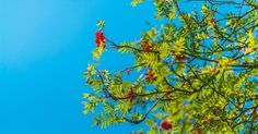 New free stock photo of nature sky branches