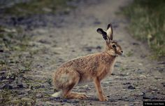 © Blende, Laura Haase, Familientreffen | #Tierfotografie #Hase   #animalphotography #rabbit