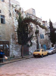 Old city of nablus #Palestine  b