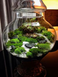 Moss Terrarium. Beautiful.