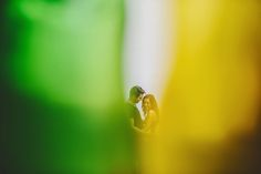 mexico_wedding_photographer_008