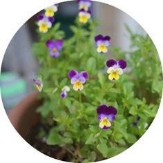 The benefits of cat grass plus 15 more feline-safe plants cats love!