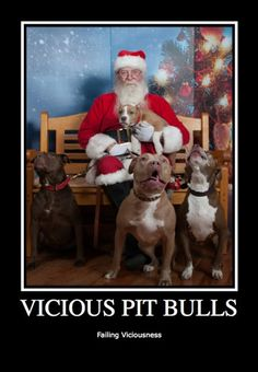 Vicious Pit Bull....Failing Viciousness