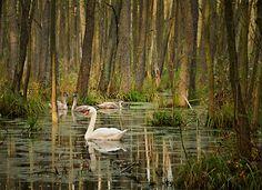Miejscowość: Dębno Kraina: Pojezierze Myśliborskie #trawerswpolske