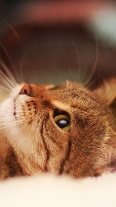 cat, lying, cool cat, beautiful cat