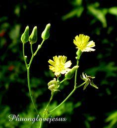 Close Up, San, Nature, Plants, Naturaleza, Plant, Nature Illustration, Off Grid, Planets