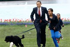 """1. The Obamas – Bo    Referred to as """"the first dog,"""" Portuguese Water Dog Bo was gifted to the President Barack Obama and his family by Senator Ted Kennedy in April 2009"""