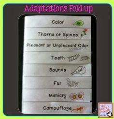 Animal Adaptations Flip-Up Book
