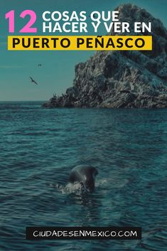 12 cosas y lugares para visitar en Puerto Peñasco | Las mejores 12 cosas por hacer en Puerto Peñasco | En Puerto Peñasco Sonora México no solo podrás disfrutar de las hermosas playas, sino también puedes bucear, ver ballenas, aves, y hasta jugar golf a la orilla del mar de Cortés. ¡Te va a encantar! #visitamexico #visitmexico #sonora #puertopeñasco #playas #desierto #buceo #ballenas #golf #méxico #mexicotravel #viajes #viajesbaratos #ciudadesenmexico Puerto Penasco Mexico, Puerto Peñasco, Mexico Travel, Beautiful Creatures, Travel Inspiration, Around The Worlds, Trips, Traveling, Health