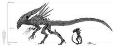 xenomorph+queen | School Project - Xenomorph Study by MysliPox on deviantART
