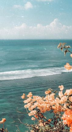 Bougainvillea at the ocean- flowers Aesthetic Pastel Wallpaper, Aesthetic Backgrounds, Aesthetic Wallpapers, Iphone Background Wallpaper, Nature Wallpaper, Homescreen Wallpaper, Flowers Background, Ocean Flowers, Nature Aesthetic