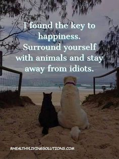 I found the key to happiness. Surround yourself with animals and stay away from idiots. Motivacional Quotes, Quotable Quotes, Wisdom Quotes, Funny Quotes, Key To Happiness, Animal Quotes, Cute Funny Animals, I Love Dogs, Animals Beautiful