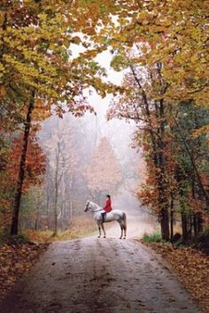Splendor in the South ~ fall