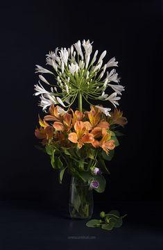 Agapanthus, Alstroemeria and caper flower bouquet.