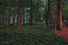 "One Shot: ""Summer Lights"" / B-Metro July 2013 / Photo by Meg McKinney"