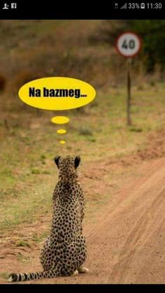 😂😂😂 Fuck that (Bazdmeg is the most used hungarian curse word. Cute Baby Animals, Animals And Pets, Funny Animals, Wtf Funny, Funny Fails, Funny Photos, Funny Images, Hahaha Hahaha, Humor
