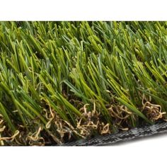 Grass & Grass Seed at Lowes.com Artificial Grass Balcony, Artificial Turf, Growing Grass From Seed, Fescue Grass, Landscape Materials, Grass Seed, Lawn Care, Lawn And Garden, Ferns