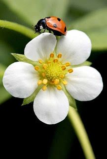 The Nicest Pictures: flower vs ladybird