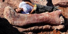 Earth's largest dinosaurs are discovered in Argentina | Geology IN