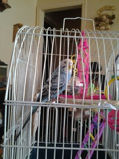 Tweety, my parakeet. She's a real sweet bird