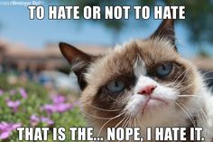 Twitter / RealGrumpyCat: To hate or not to hate... ...