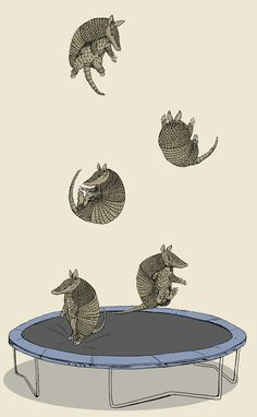 "trampolining armadillos - Jillian Nickell [mto legal, primeiro tu acredita que os tatus estão caindo, ""ahh não, tadinhos...ahh hahah legal"" it's amazing, cuz you first think ""oh no, falling armadillos...ah hahahah that's cute..."" you tricked me pinterest dash... - rafaela b]"
