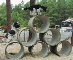 Doggie Playground {{ please see Dog Obstacle Confidence Course Video on this board to see these dogs run over this obstacle }}