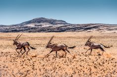 Capturing Namibia With Gary Arndt http://wlst.us/Fa #travel #Live4Adventure #photography #inspire #Africa