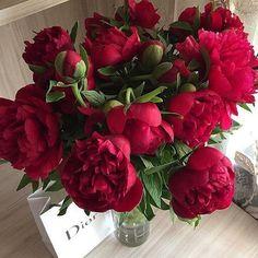 New flowers wedding tulips peonies Ideas Piones Flowers, Peony Flower, Flowers Nature, Planting Flowers, Beautiful Flowers, Wedding Flowers, Red Peonies, Peonies Bouquet, Bouquets