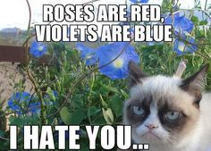 rose are red, violets are blue. i hate you....