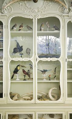 Cabinet of Curiosities of Bonnier de la Mosson, Library of the Museum of Natural History, Paris