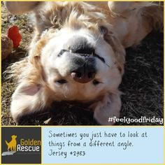 Being silly can be fun! #FeelGoodFriday #goldenretriever #secondchance Feel Good Friday, Rescue Dogs, In This Moment, Animals, Beautiful, Animales, Animaux, Animal, Animais