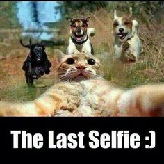 Looks like a rattie is the ring leader of this cat's final selfie . Dump A Day Attack Of The Funny Animals - 26 Pics Cute Animal Memes, Funny Animal Quotes, Animal Jokes, Funny Animal Pictures, Cute Funny Animals, Cute Baby Animals, Cute Cats, Funny Quotes, Funniest Animals